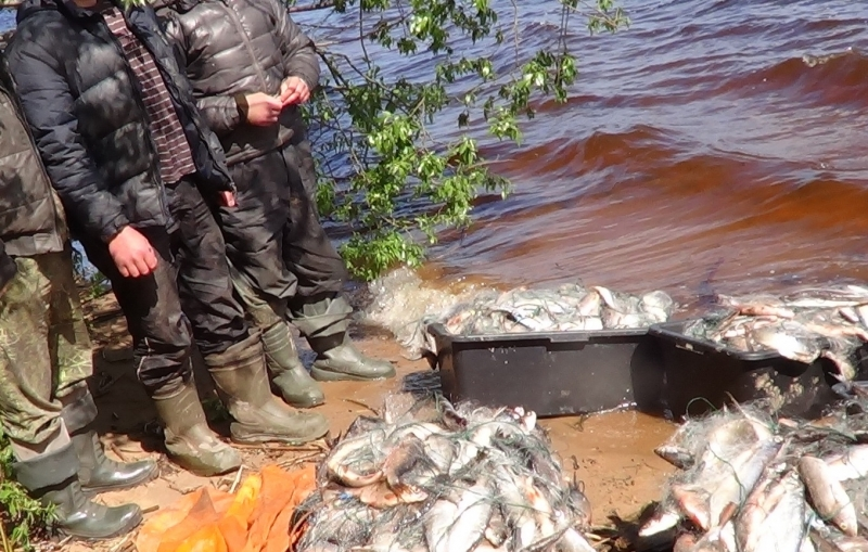 браконьерское видео охота и рыбалка