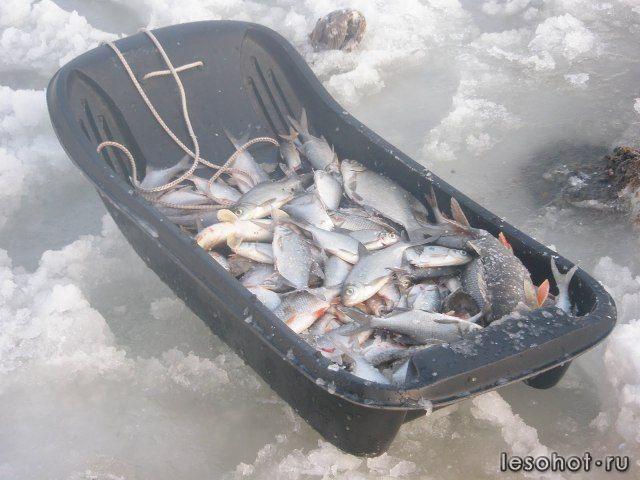 клев рыбы на озере пирос