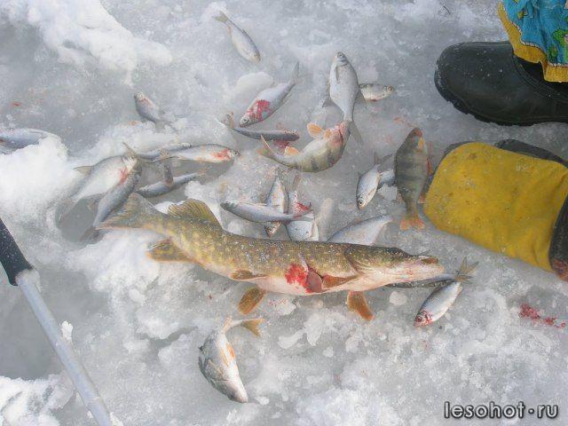 рыбная ловля в димитровграде