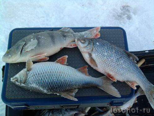 рыбалка в коприно ярославская область