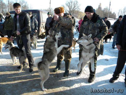 ловля собак ростов