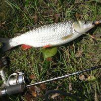 отчеты о рыболовной приманки fish hungry