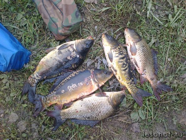 рыбалка в ярославской районе отчеты