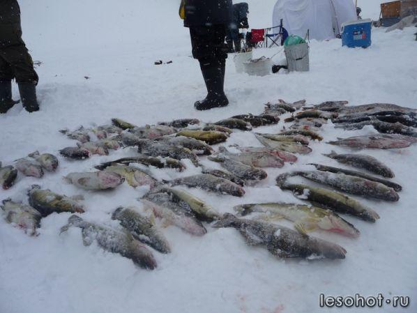 весенняя рыбалка в вологодской области