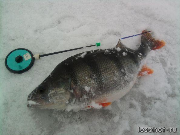 форум рыбаков ишима