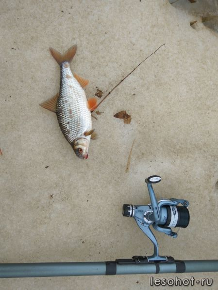 лесохот форум рыбаков ярославль отчеты о рыбалке сегодня