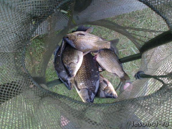 Рыбалка на реке кештома ярославской области