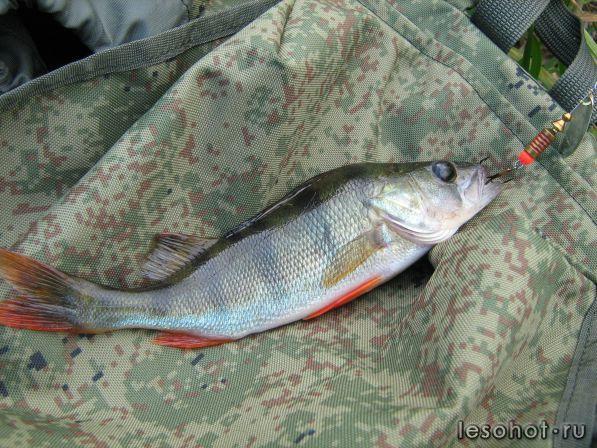 Рыбалка на прусовских