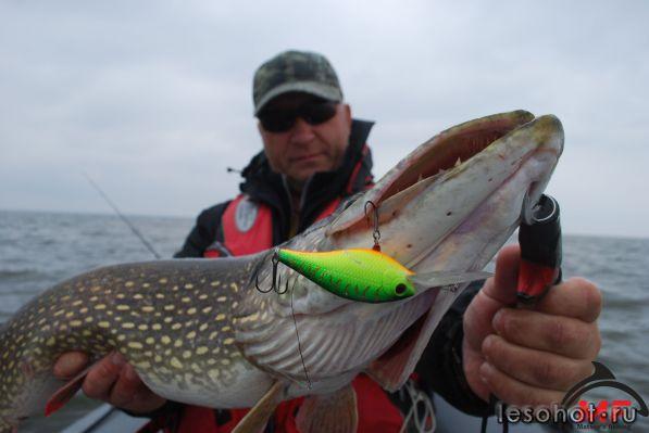 видео рыбалка на воблер