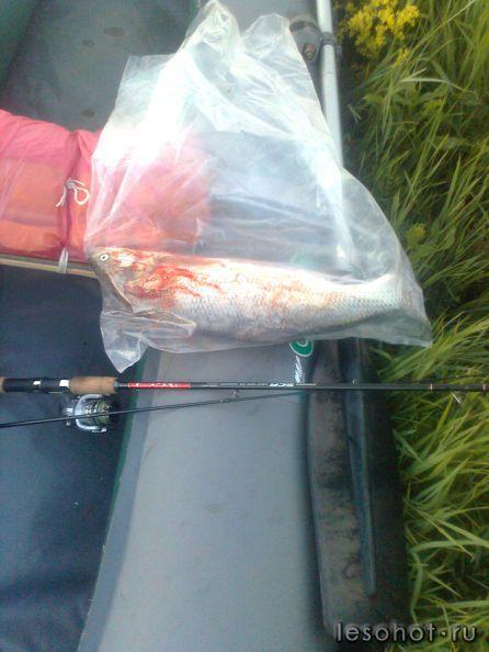 магазин все для рыбалки в бибирево