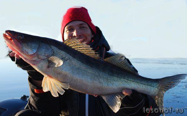 ловля морской плотвы весной на рыбинке
