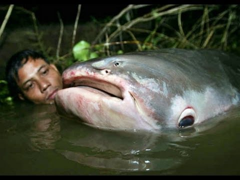 MonsterQuest - Giant Killer Fish (1)