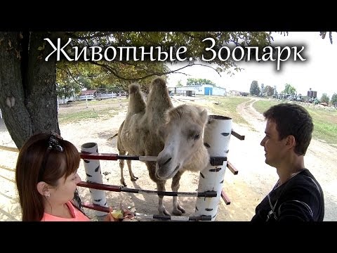 ��������.������� (Zoo. Animals) ...Turistorii