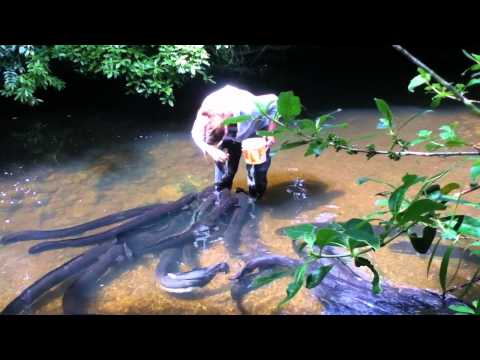 Stephanie Bowman feeding eels at Pukaha